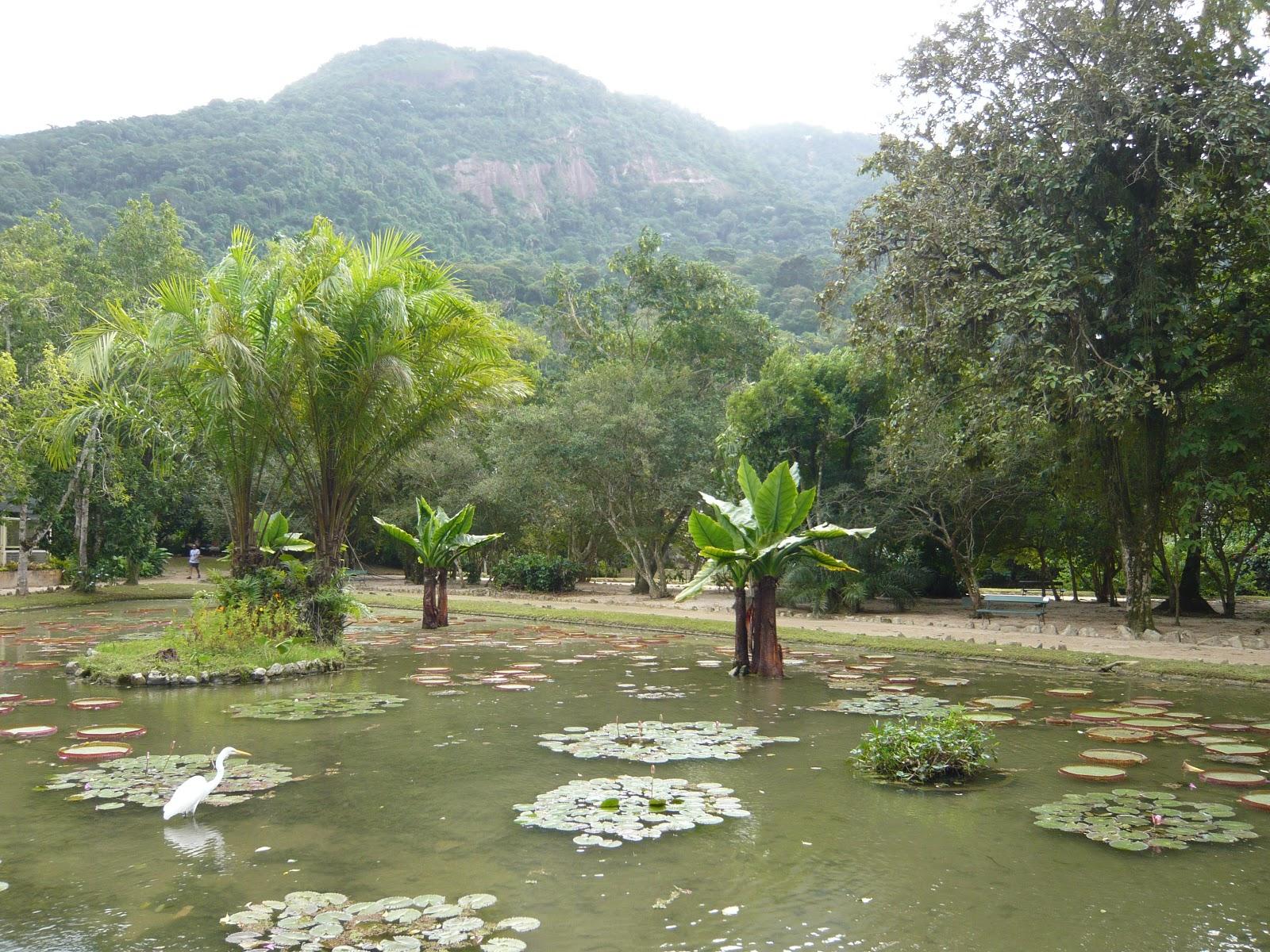 brasil masta gavage  rio de janeiro   jardim bot u00e2nico
