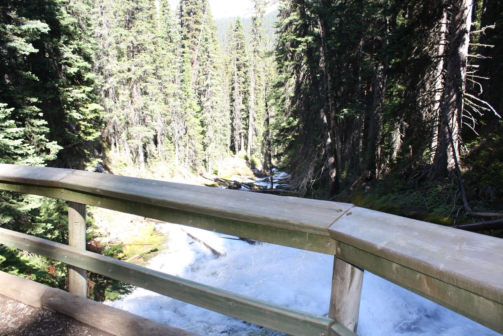 My wacky journey thru time...: Karst Springs Hike