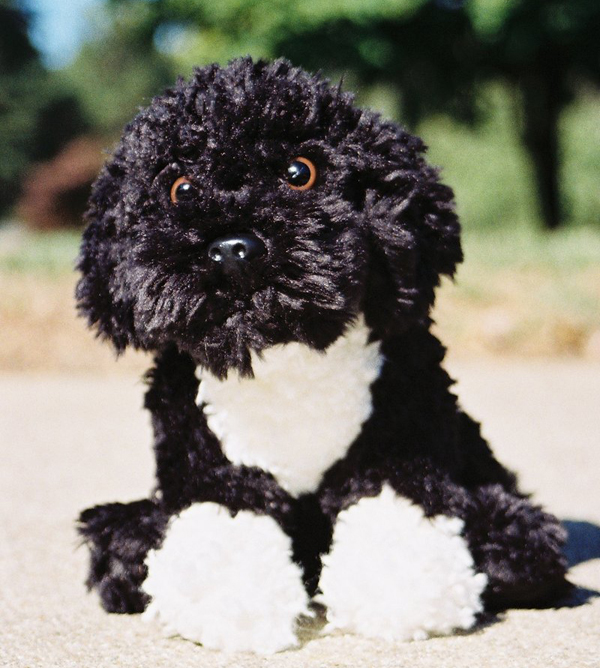 the dog in world curly hair dog image so beautifull