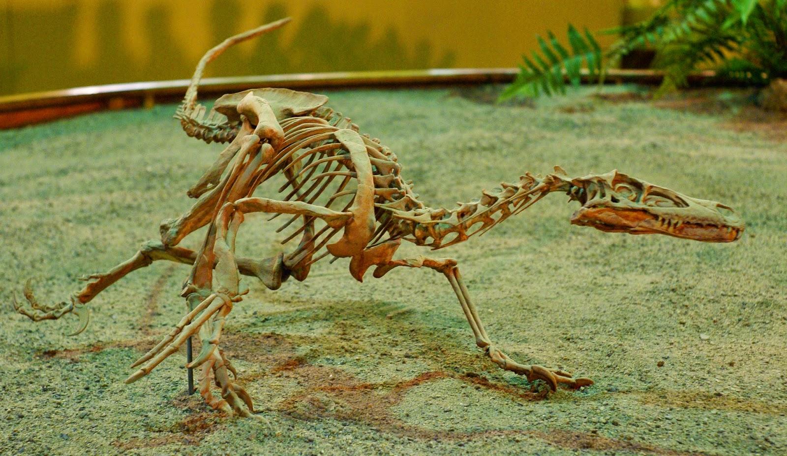 Il Velociraptor è stato rinvenuto in Mongolia