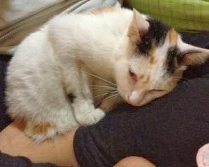 penyebab bulu kucing rontok, kenapa bulu kucing rontok, cara mengatasi bulu kucing rontok