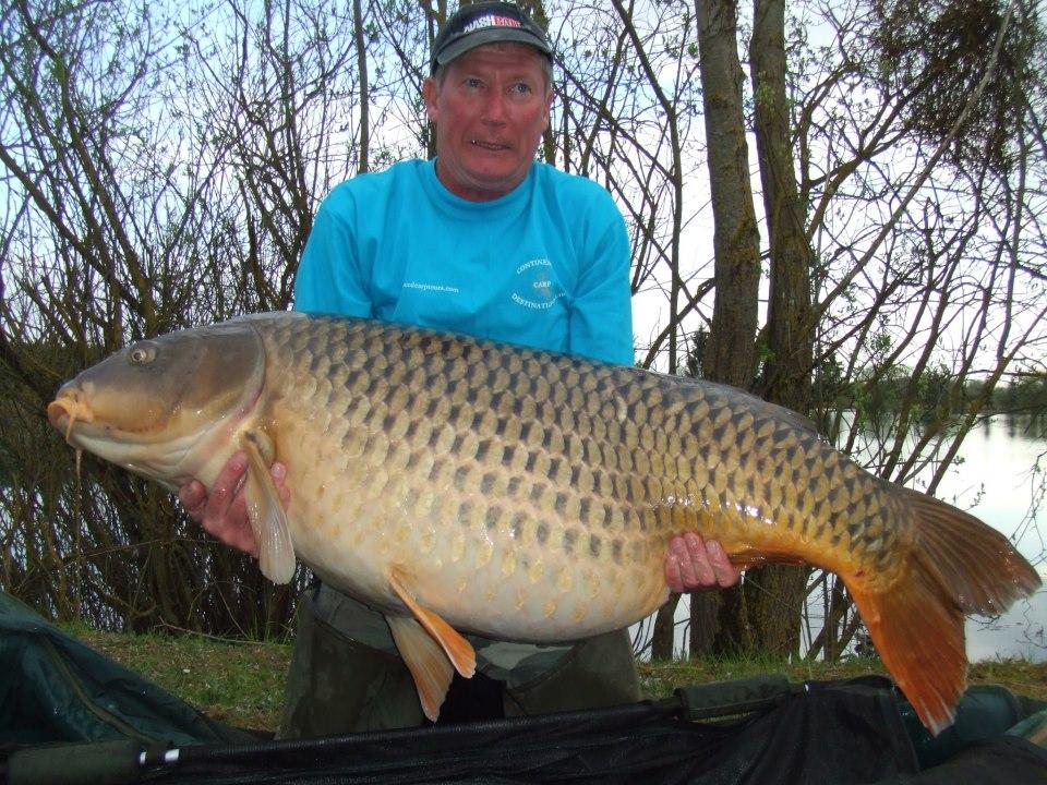 Big fishes of the world carp common cyprinus carpio carpio for Largest koi fish