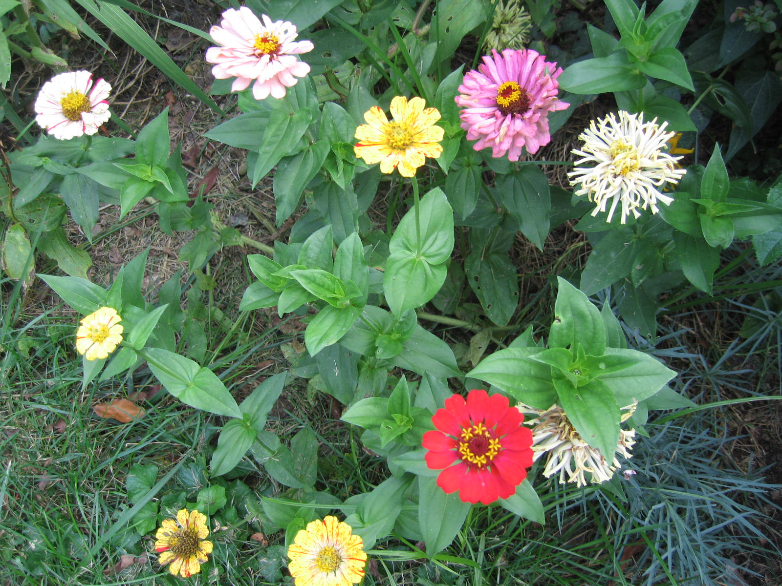 Minhus Winter Sowing Grow Beautiful Flowers And Plants