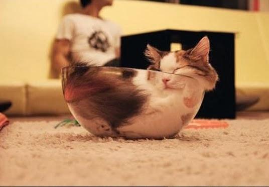20 доказательств того, что коты это жидкость
