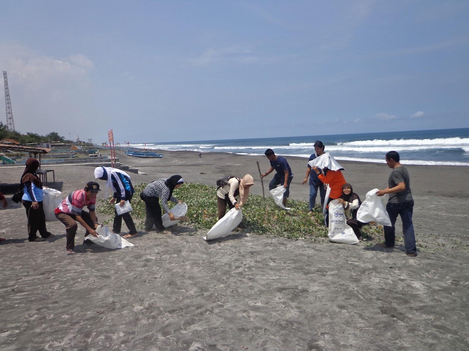 kegiatan adiwiyata di pantai jatimalang