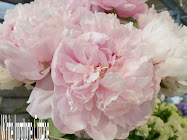 Love Pink Peonies