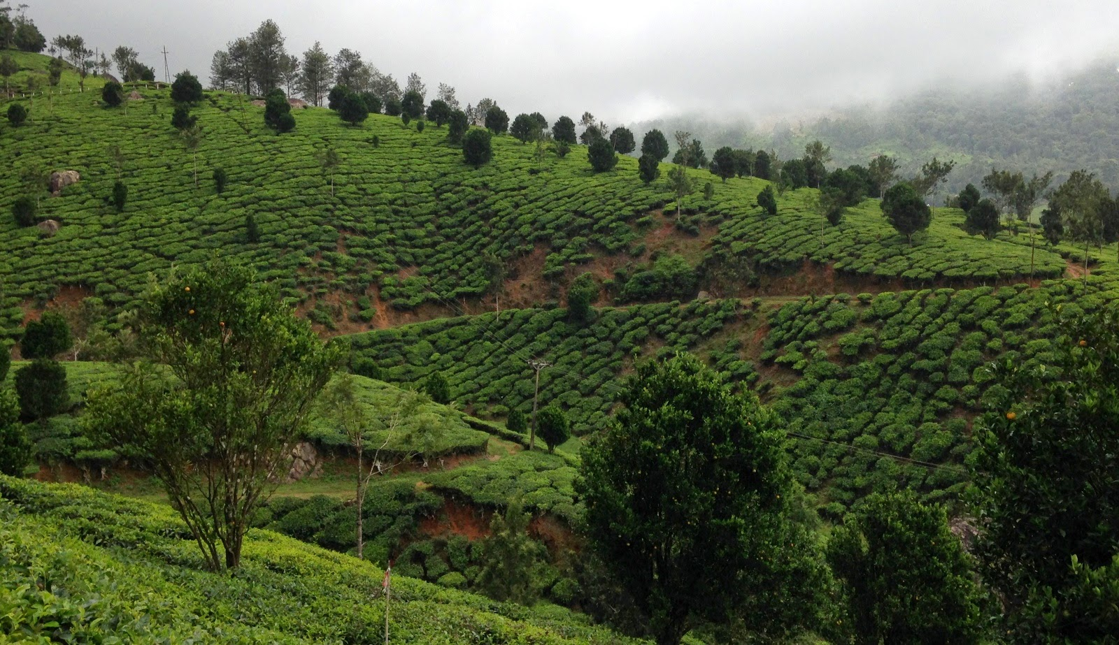 Munnar in Monsoon