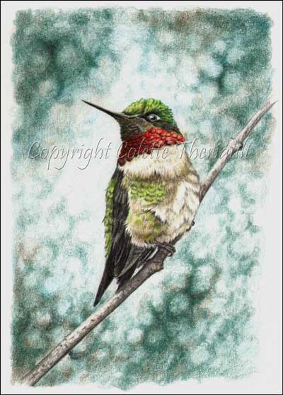 ruby-throated hummingbird avian drawings and paintings by Colette Theriault