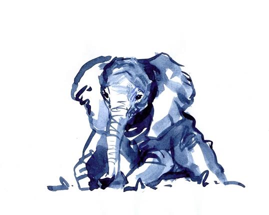 набросок слоненка