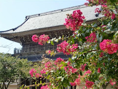 光明寺山門とサルスベリ