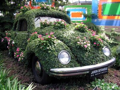 voiture-jardin-plante-insolite-coccinelle-623925.jpg