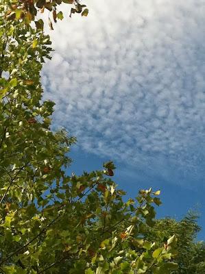 Leafy Sky (c) 2013 by Maja Trochimczyk