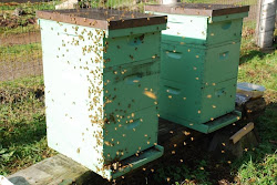 Apiary