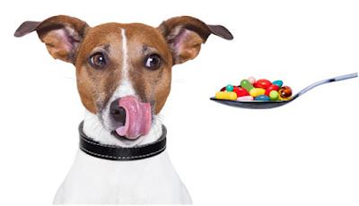 Dùng thuốc uống cho cún