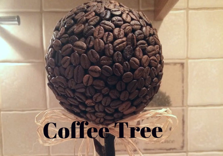coffee tree riga