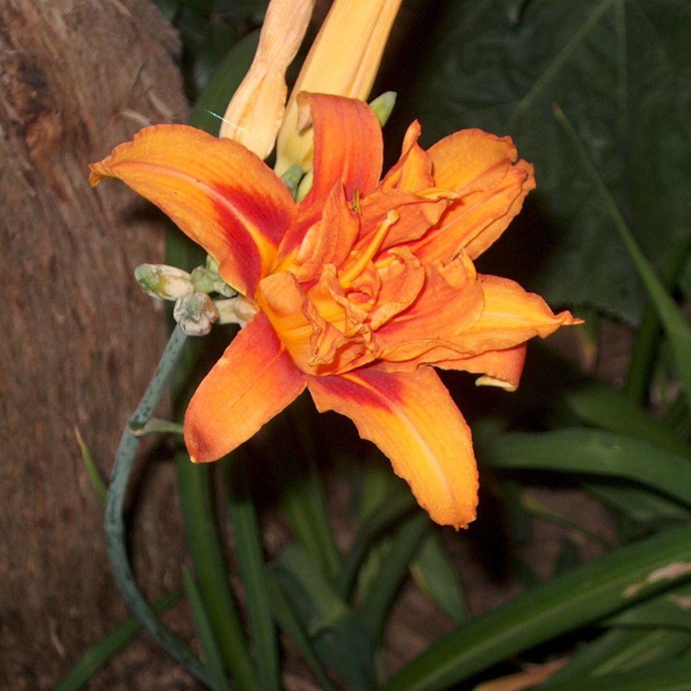 les fleurs comestibles et les plantes aromatiques de votre jardin h m rocalles. Black Bedroom Furniture Sets. Home Design Ideas