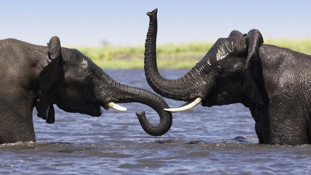 Elephant HD Wallpaper 10