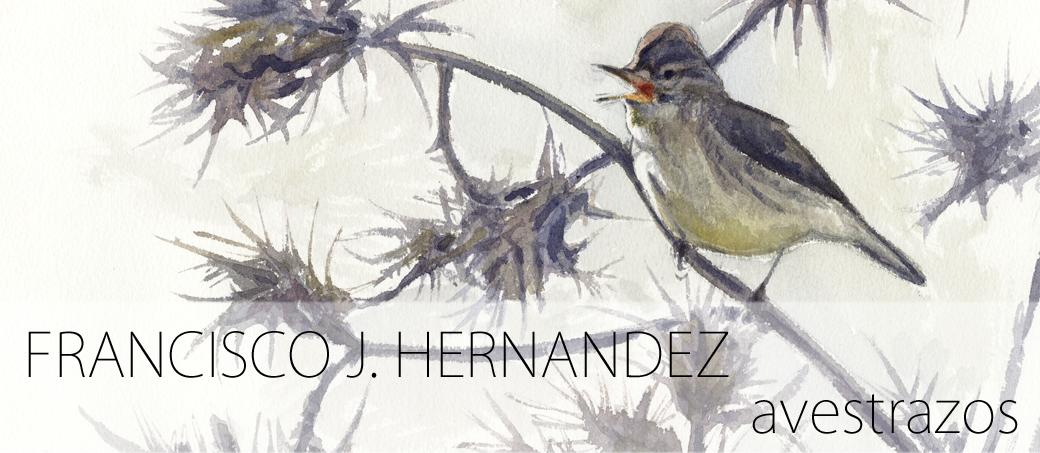 AVESTRAZOS por Francisco J. Hernández
