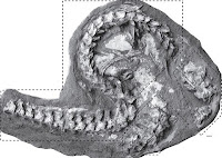 http://sciencythoughts.blogspot.co.uk/2013/08/giant-fossil-sea-snakes-from-early.html