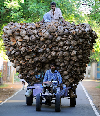 Agriculture, Business, Capital, Coconut, Colombo, Economy, Farmer, Fruit, Husk, Jaffna, Poverty, Sri Lanka, Tamil, Transport, Summit, War, Crime, Commonwealth,