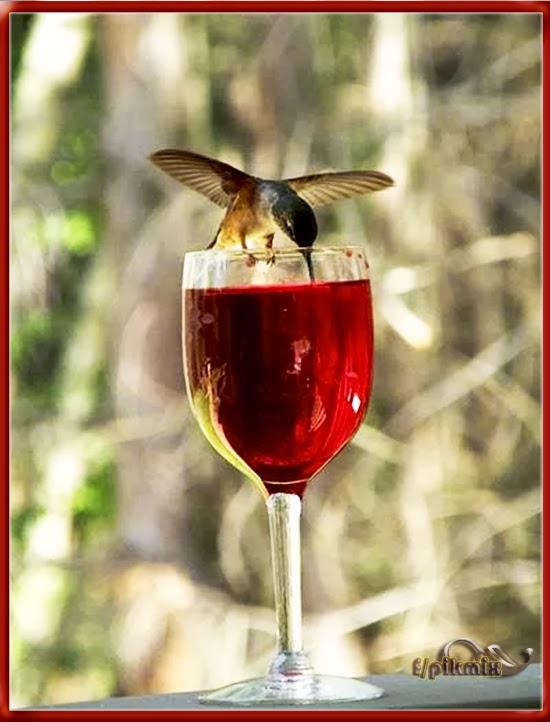 Colibri  - Imágenes - copa, simpatico,