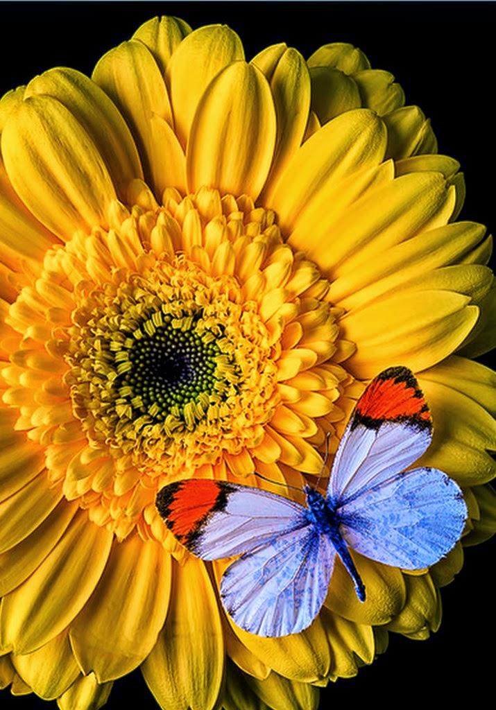 cuadros modernos pinturas y dibujos mariposas y flores fotos archivo de imgenes