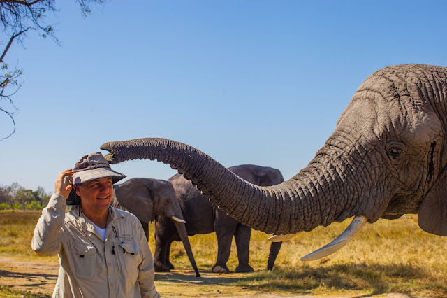 Vahşi hayat: Bir filin neden bagaja ihtiyacı var
