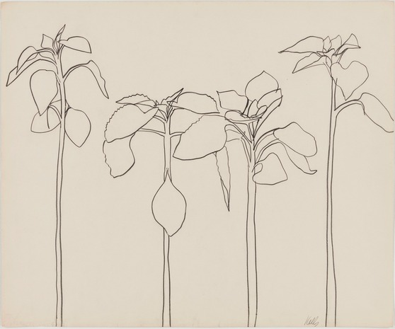 Contour Line Drawing Plant : Marie dauenheimer s art and anatomy ellsworth kelly