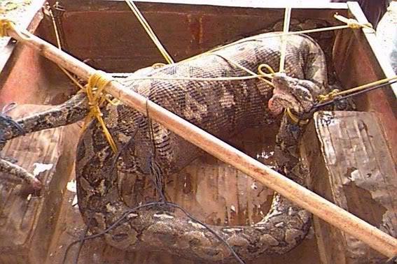 Anaconda Funny