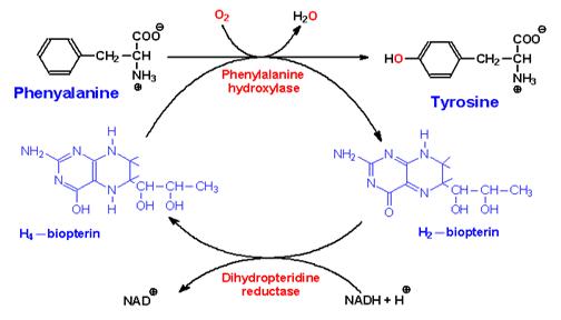 makalah biosintesis steroid