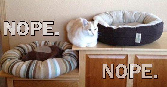Funny Meme June 2015 : Great cats be funny june