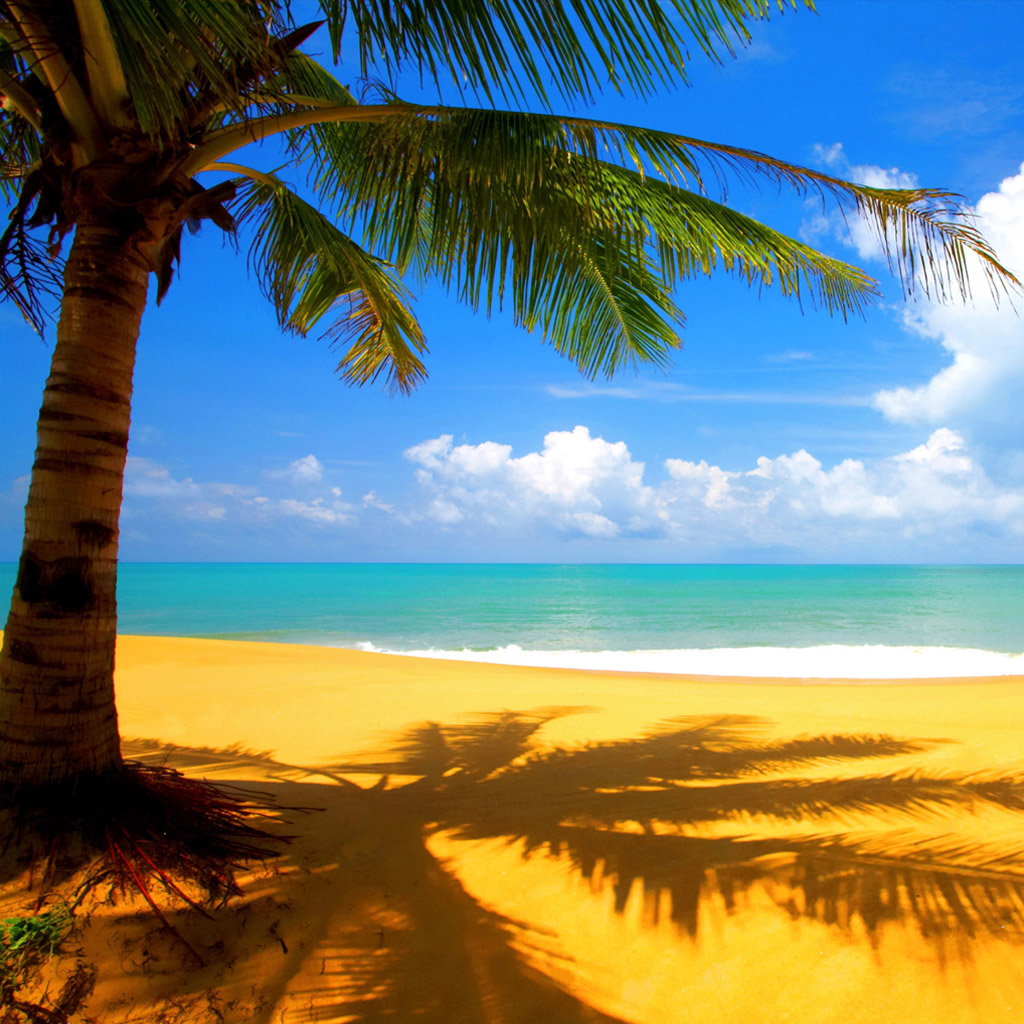 http://4.bp.blogspot.com/-AJy-U3T1l-o/T8sfktww-MI/AAAAAAAAEXE/gpJlyynSZLw/s1600/nature-free-wallpapers041-beach-palm.jpg