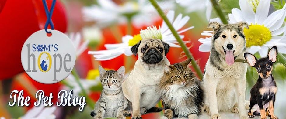Sam's Hope - The Pet Blog