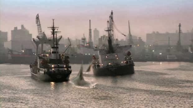 12593733733 a0382cc36e o  Đại Chiến Cá Mập