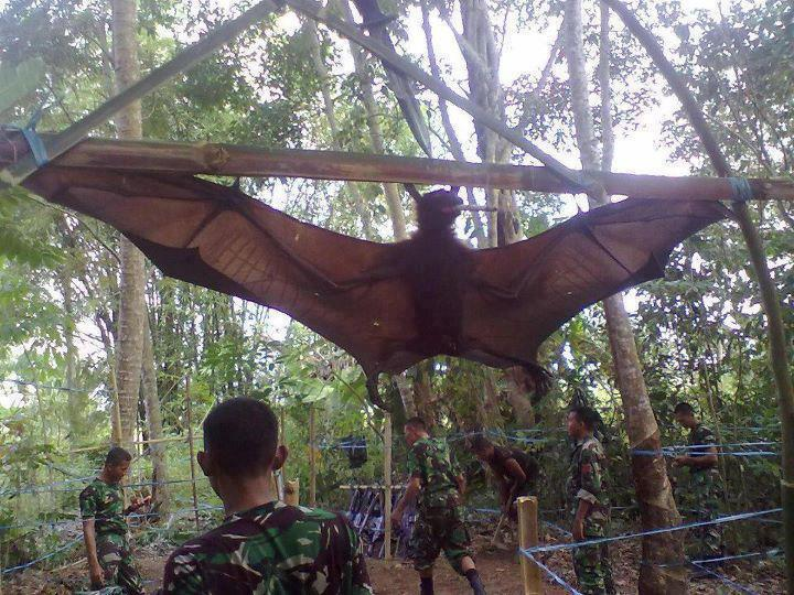 World's_Biggest_Bat http://www.kurdapyazathome.com/2012/03/only-only-in-philippnes.html