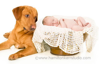 Baby lying in a basket next to a dog in a photographers studio in Kirriemuir, Angus, Scotland
