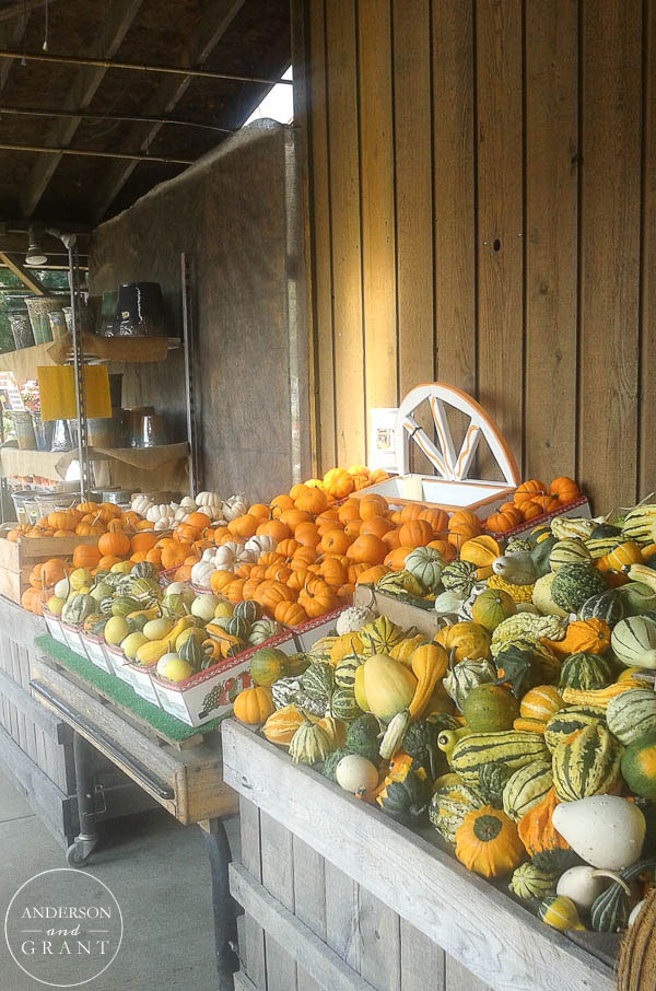 Bins of Fall Gourds