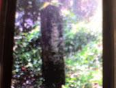 Makam La Pariusi Arung Balieng