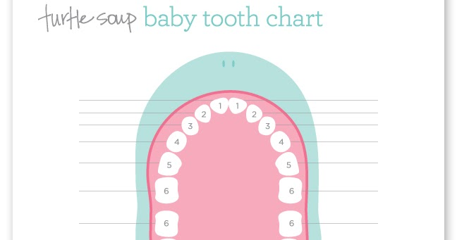 baby tooth chart
