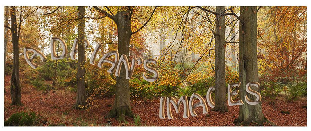 Adrian's Images