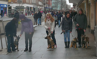 Puppies sat and waiting with puppy walkers in Exeter hight street