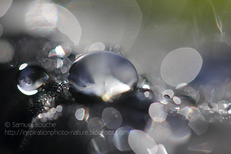 gouttes d'eau macrophotographie photo macro goutte d'eau