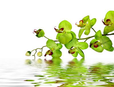 Hermosas orquídeas sobre el agua cristalina