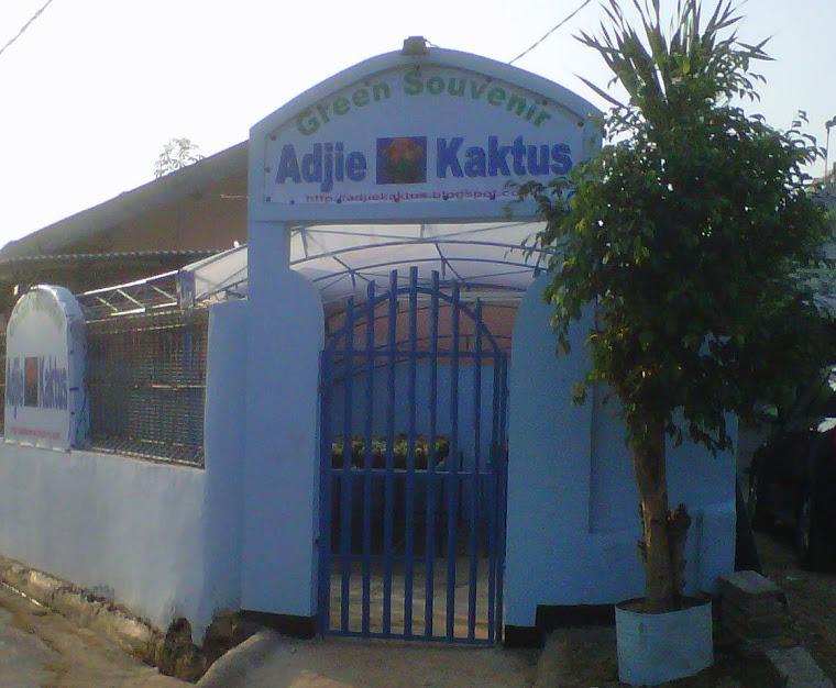 Adjie Kaktus
