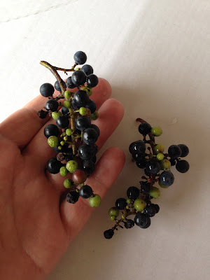 Wild Grapes Survival Food