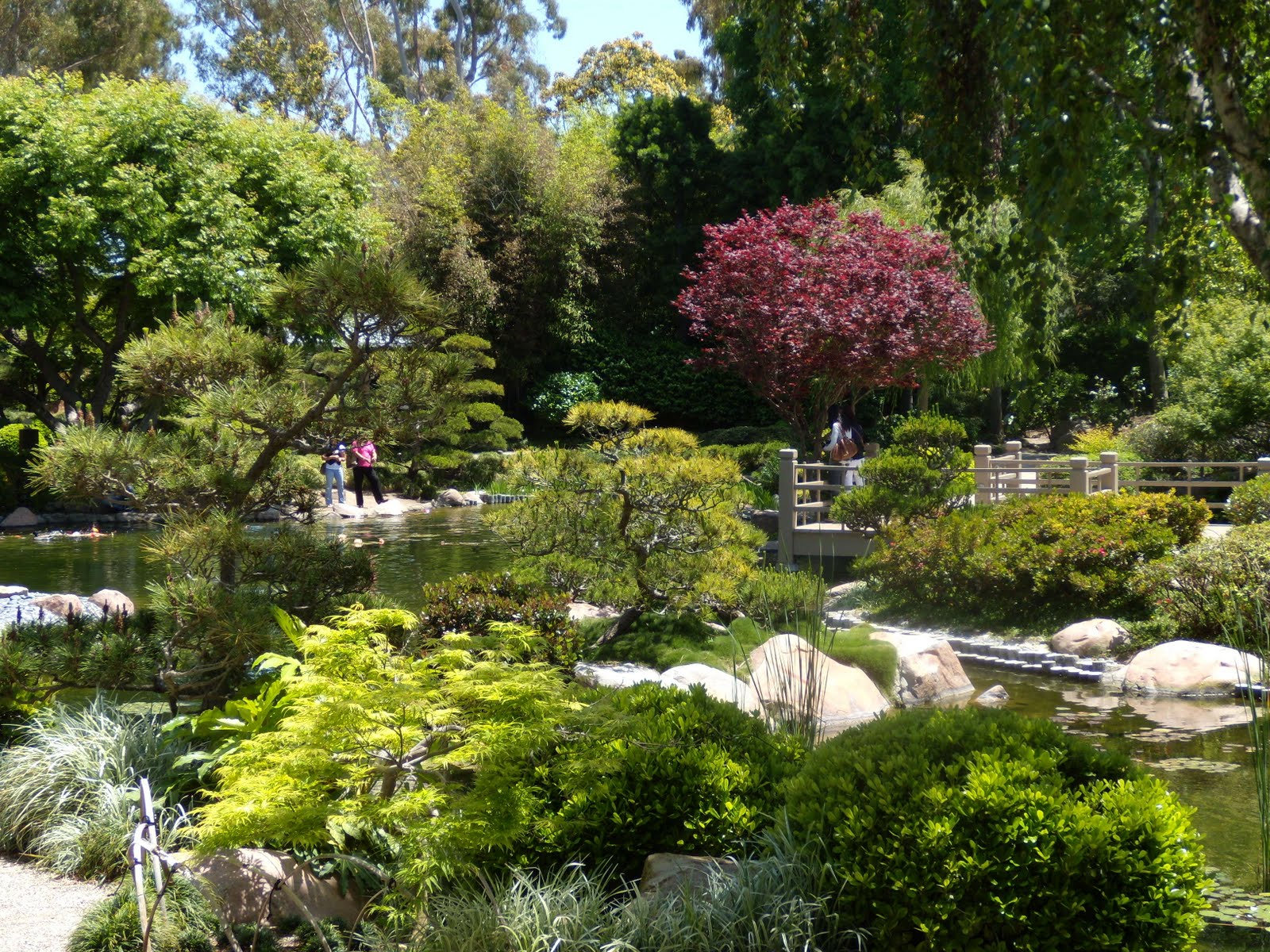 A College Oasis Strolling Through Earl Burns Miller Japanese Garden La Explorer