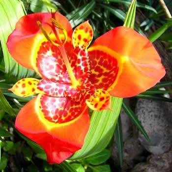 Las mejores flores del ecuador flores de la sierra for Plantas ornamentales del ecuador