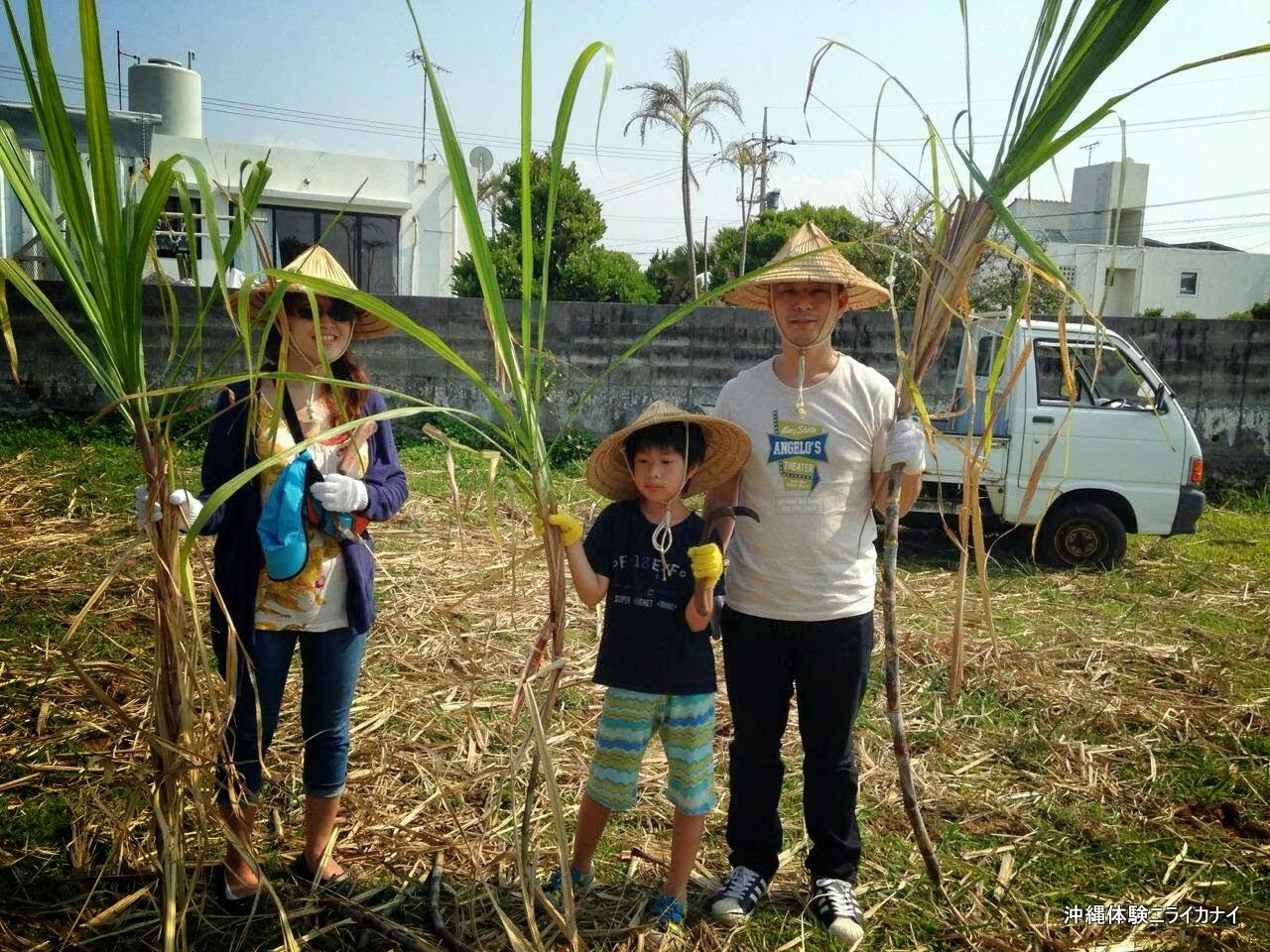 体験/観光 サトウキビ刈り体験 家族旅行
