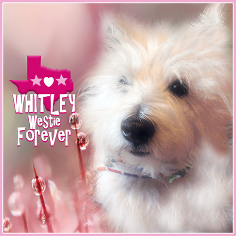 Run free dear Whitley