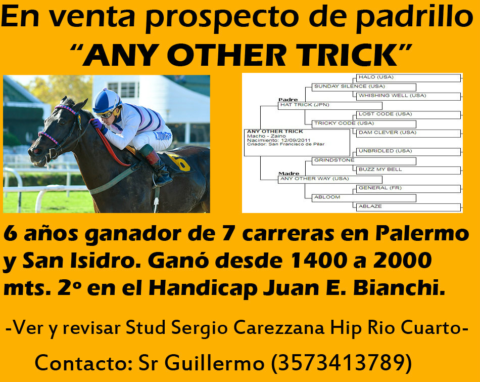 VENTA ANY OTHER TRICK
